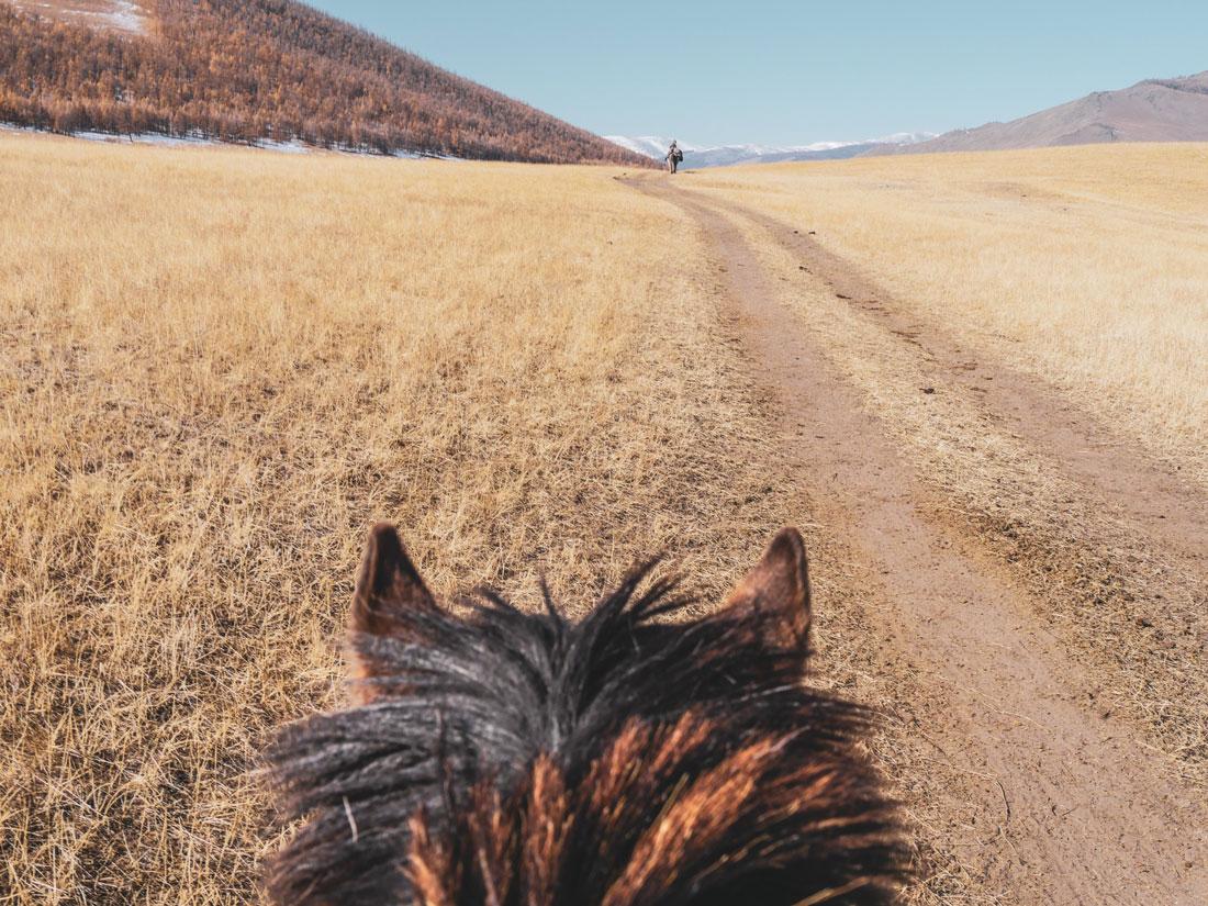 Cheval en Mongolie