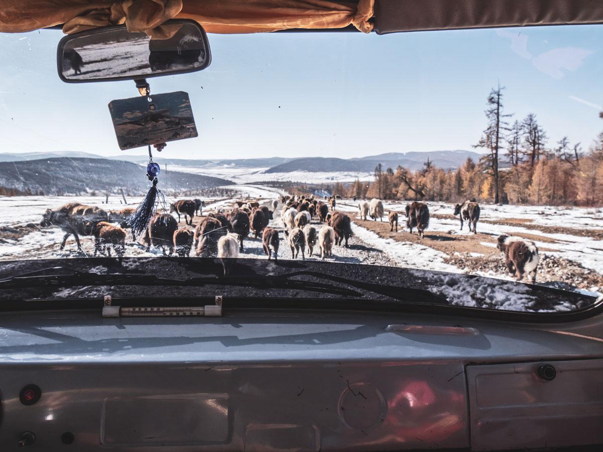 route taïga mongole