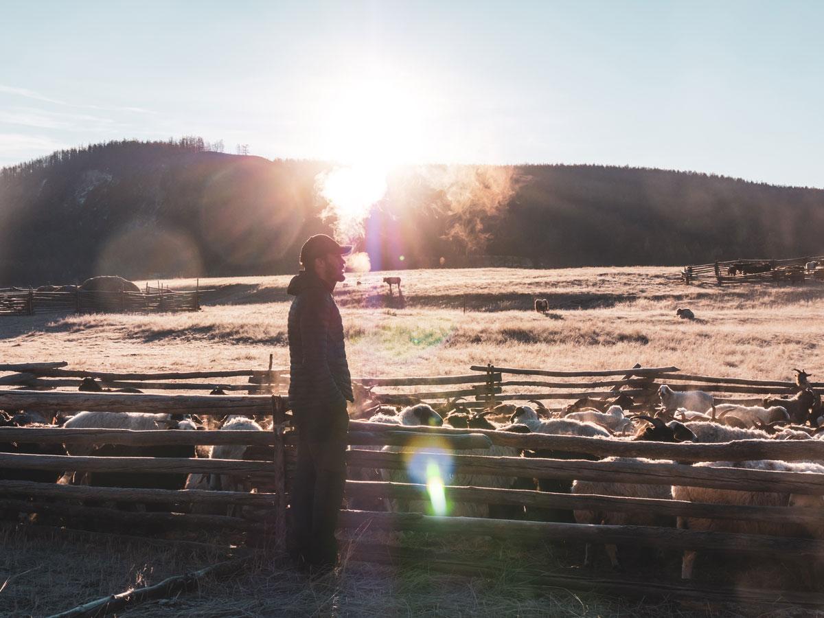 Réveil glacé dans les plaines de Mongolie
