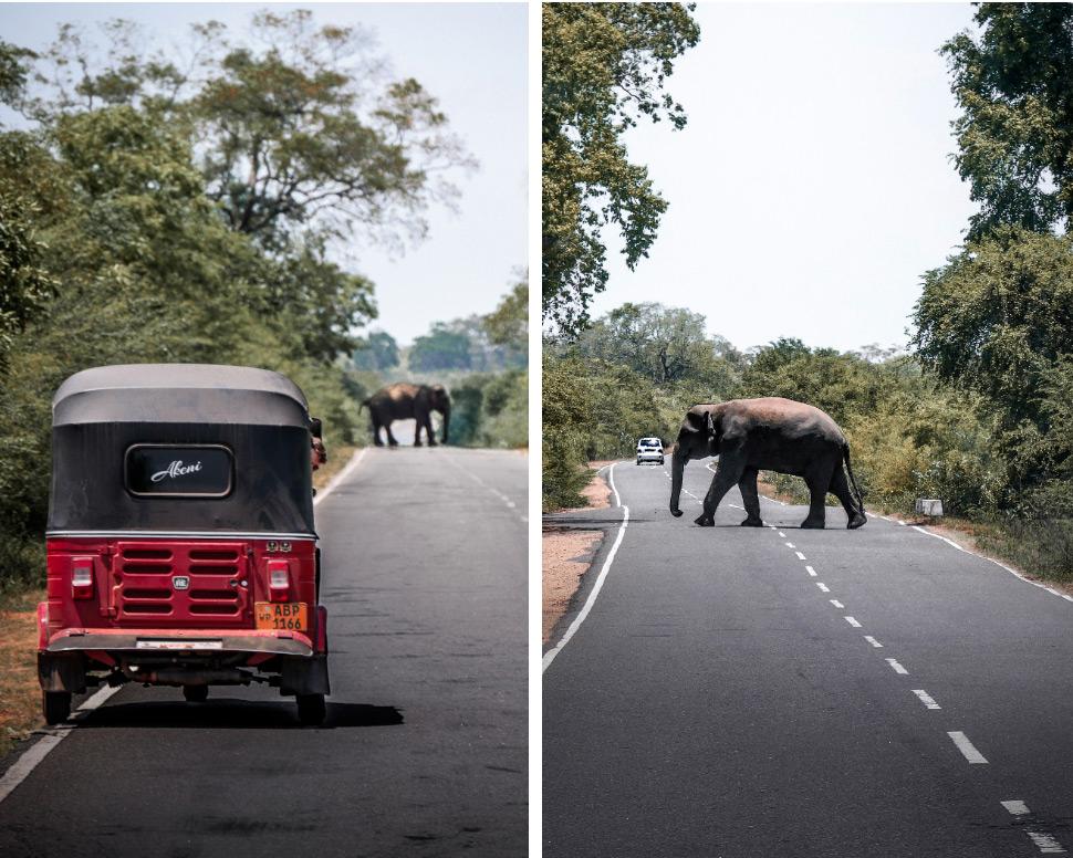 éléphant devant notre tuk tuk