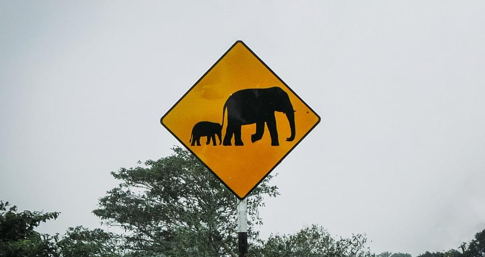 signalisation éléphant