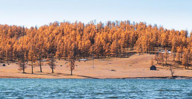 paysage de mongolie automne