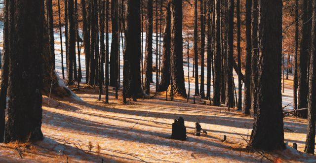 balade en forêt en mongolie