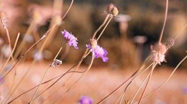 fleur cordes sur ciel