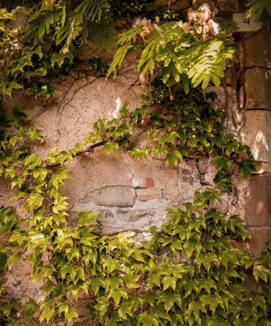 mur cordes sur ciel vegetation