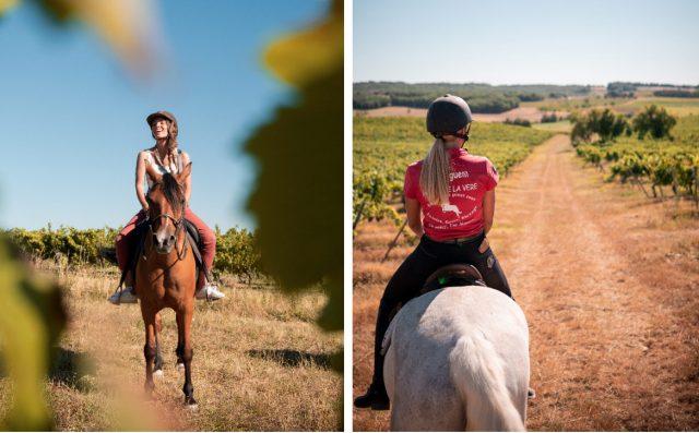 ballade cheval dans les vignes